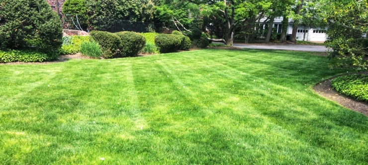 Lawn with diagonal striping lines