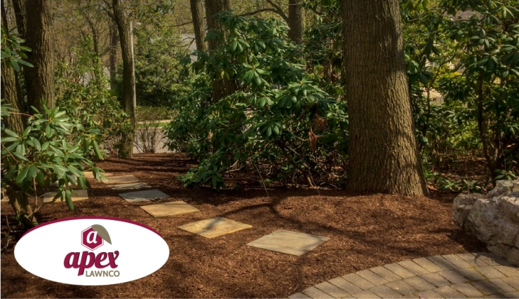 thorough cleanup, mulching and stone path installation