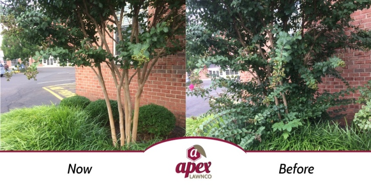 Pruning small trees before and after