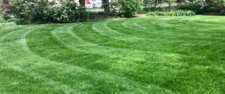 properly fertilized lawn