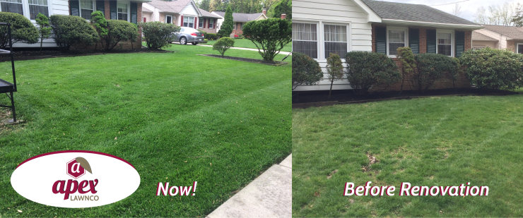 Before and after lawn seeding and aerating