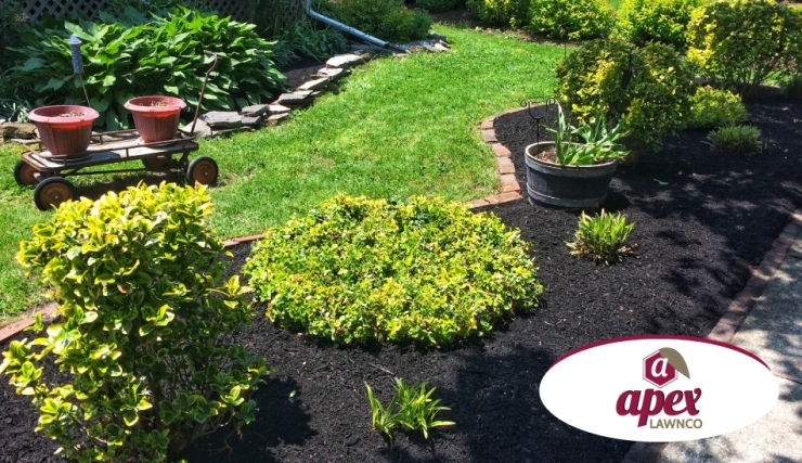 cleanup and mulching of beds