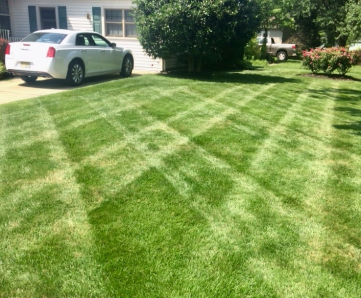 pruned landscape with checkerboard lawn pattern
