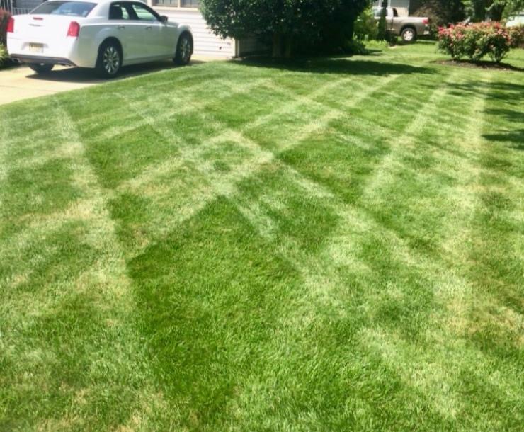 flannel striping lawn pattern