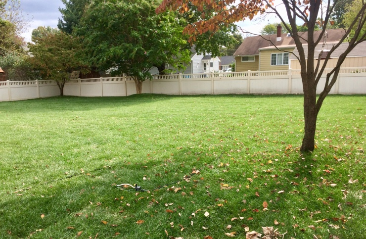 newly sodded yard
