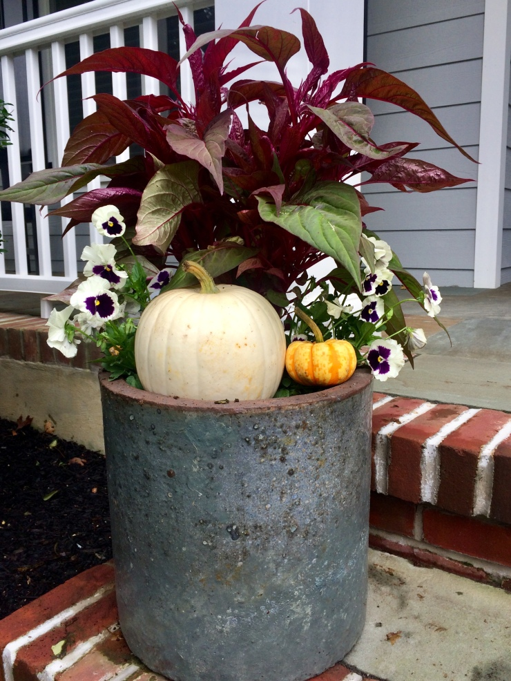 autumn annuals with pumpkins