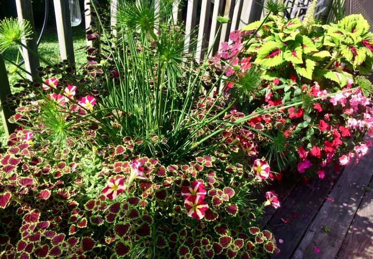 variety of summer seasonal annuals