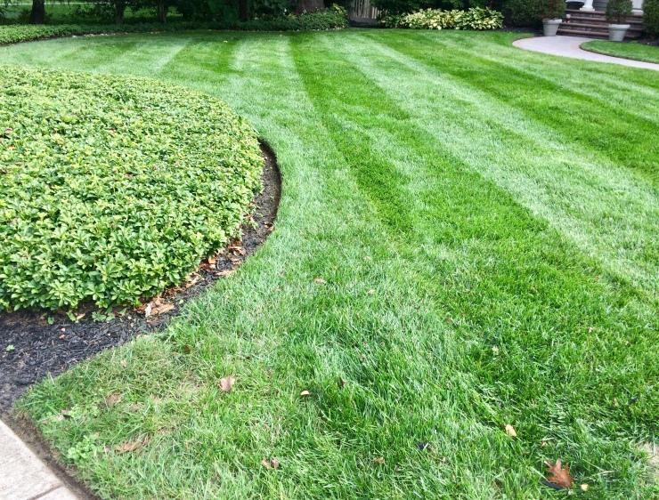 Diagonal stripes complement landscape features