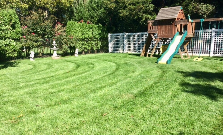 Mowing directs eye to highlights of the yard