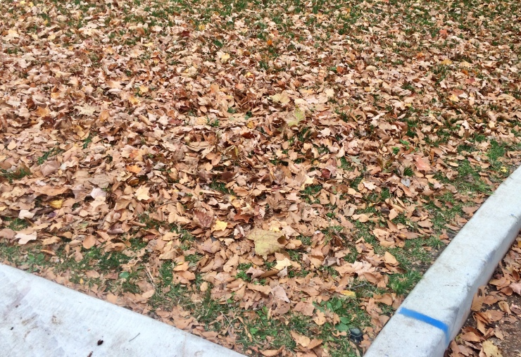 Lawn and paved areas covered with leaves
