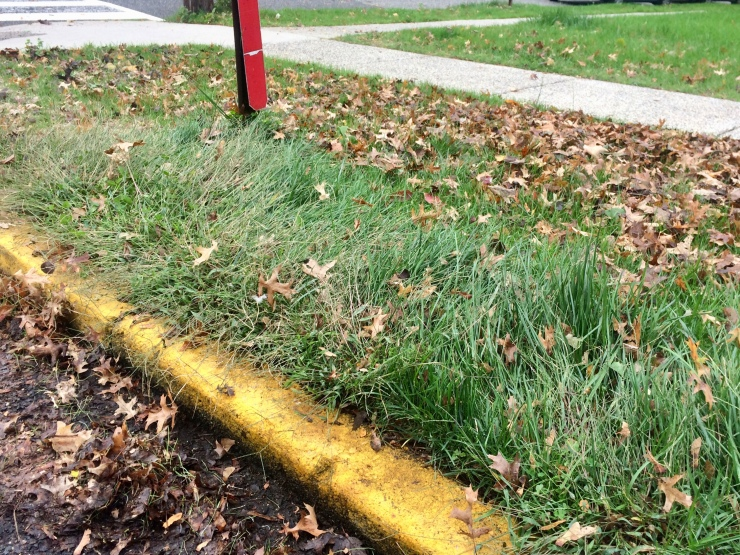 Curb before removal of Fall leaves from grass