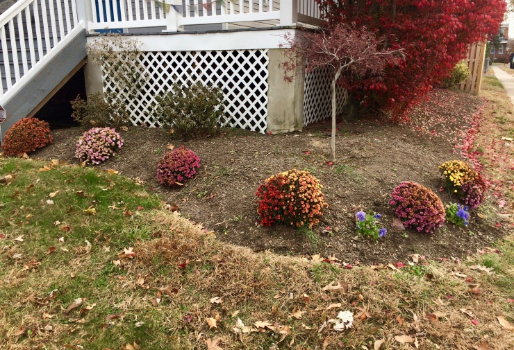 Annuals to be removed from planting bed