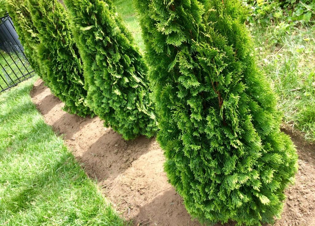 Shrub and tree plant installation