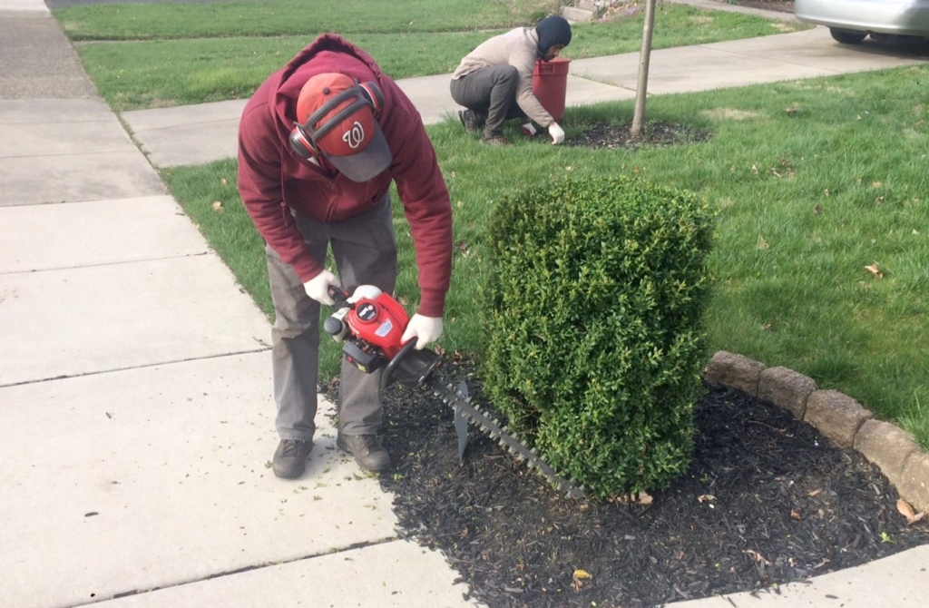 Landscape services included shrub pruning and weed removal