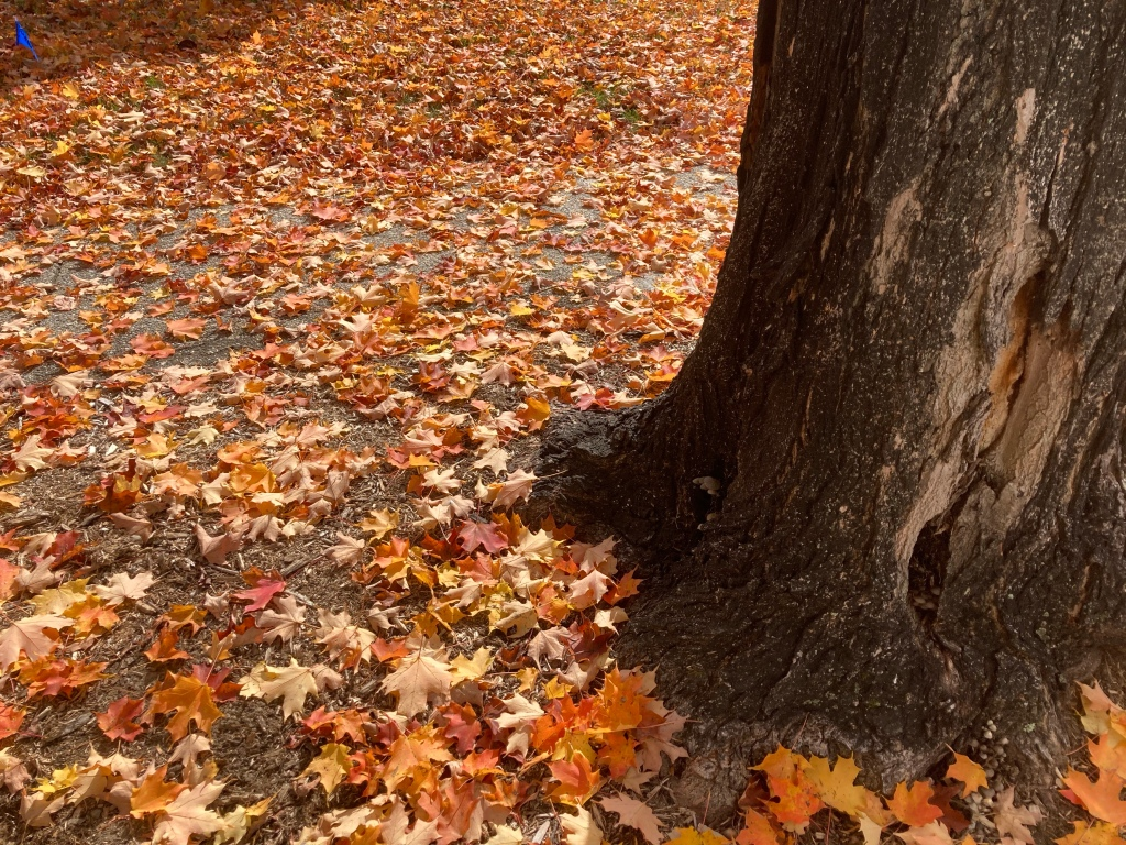 Fall leaf removal services